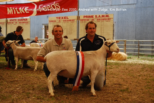 Champion White Dorper Wagin Woolarama easy care