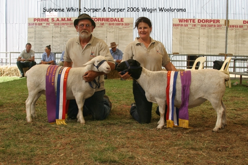 wagin woolarama, supreme champion, dorper, white dorper, bronte gardner, tamesha gardner